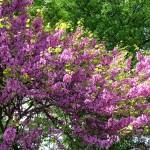 Giardini Margherita a primavera